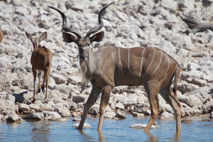 Namibia 2013 112