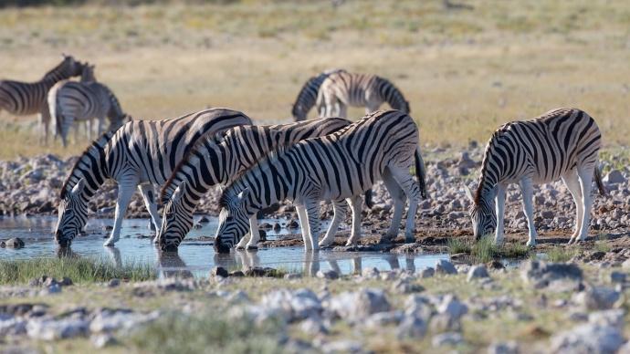 Namibia 2013 12