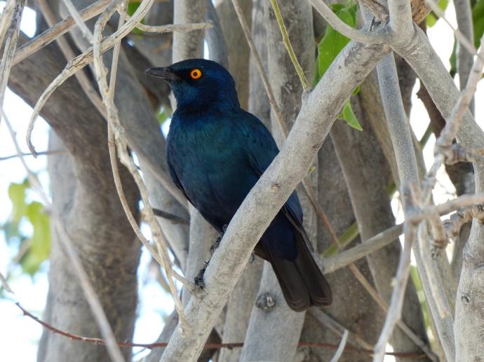 Namibia 2013 129