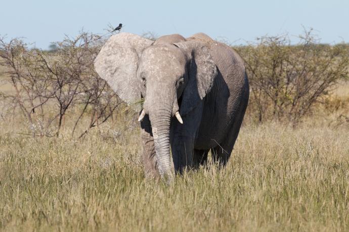 Namibia 2013 170