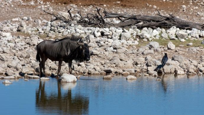 Namibia 2013 18