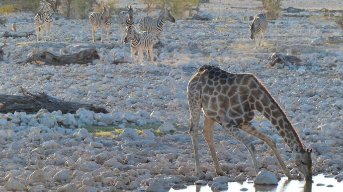 Namibia 2013 20
