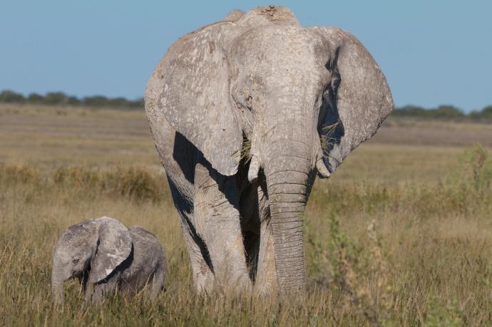Namibia 2013 214