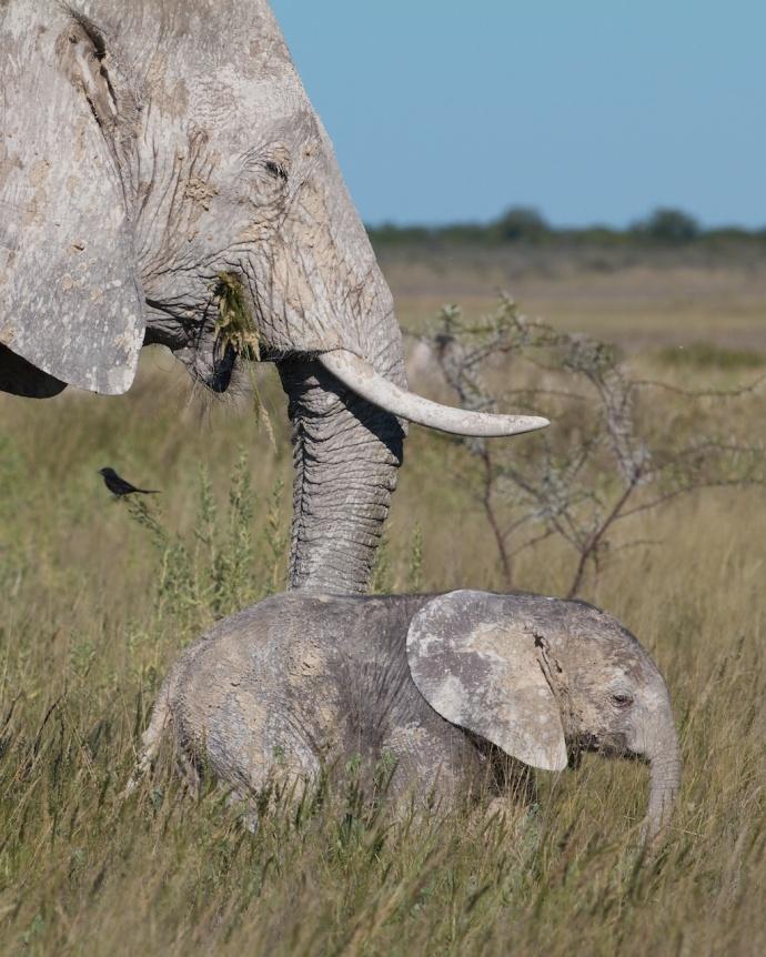 Namibia 2013 219