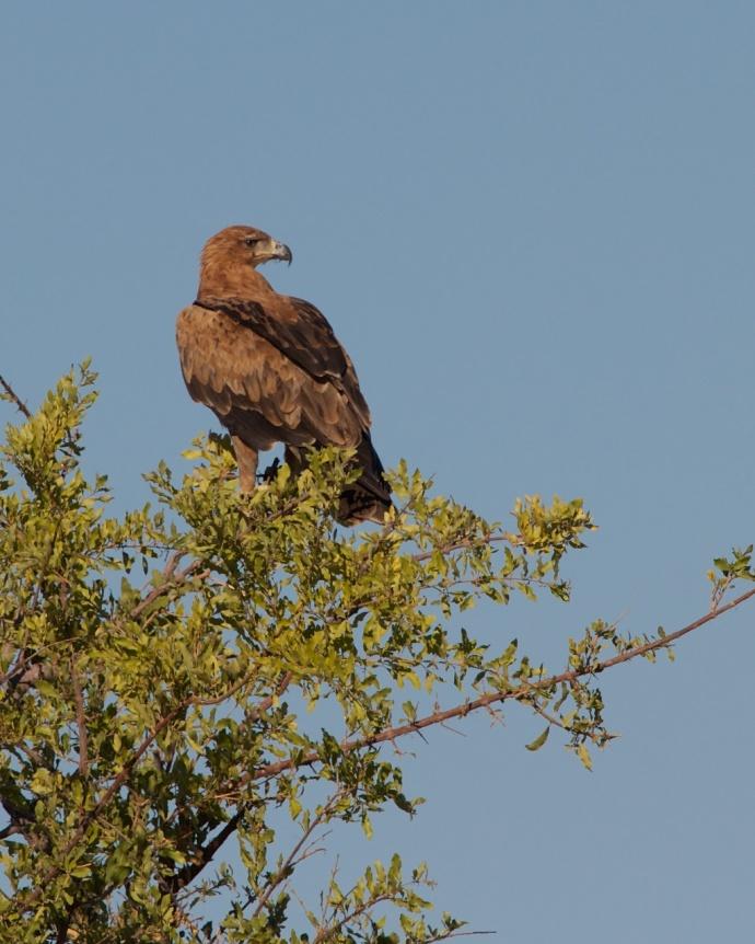Namibia 2013 236