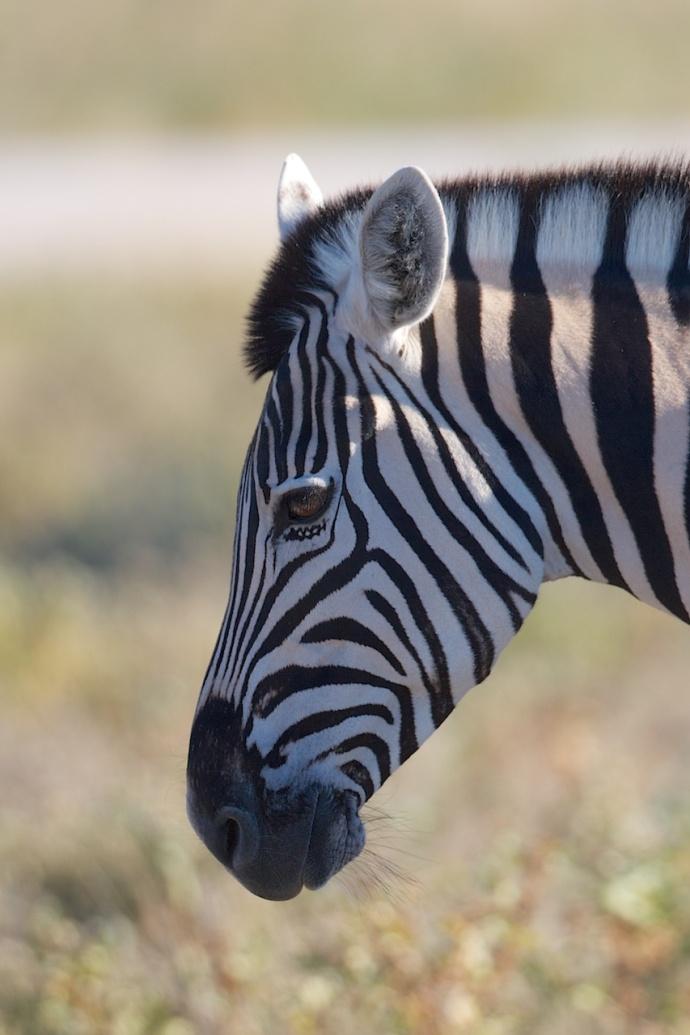 Namibia 2013 2