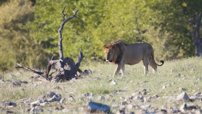 Namibia 2013 250