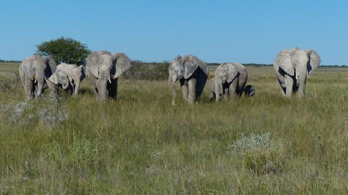 Namibia 2013 296