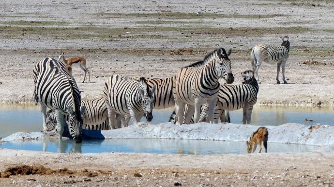 Namibia 2013 43