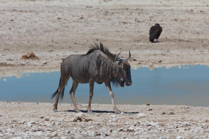 Namibia 2013 437