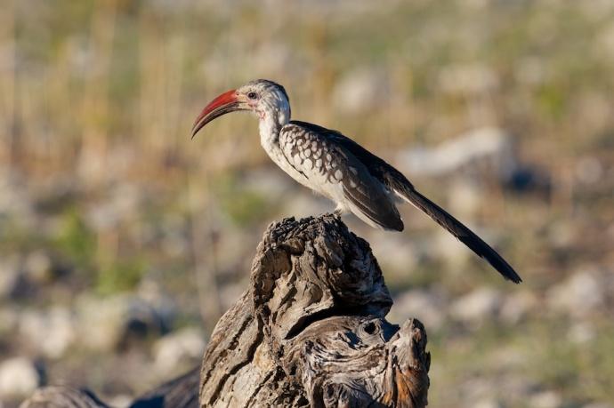 Namibia 2013 515