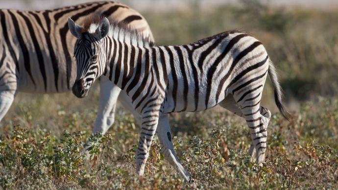 Namibia 2013 5