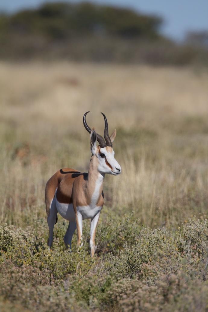 Namibia 2013 58