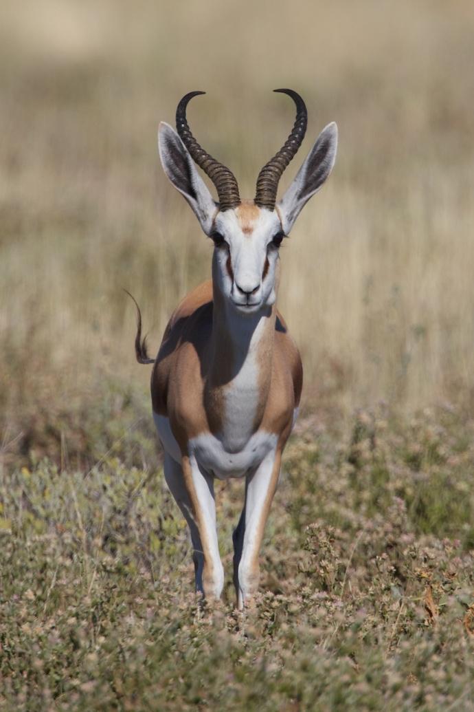 Namibia 2013 63