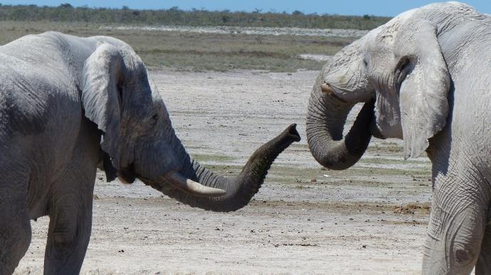 Namibia 2013 69