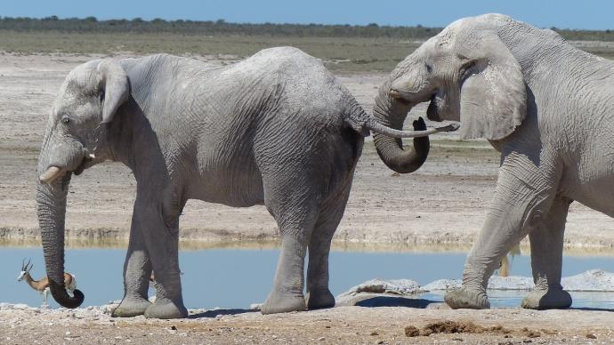 Namibia 2013 71