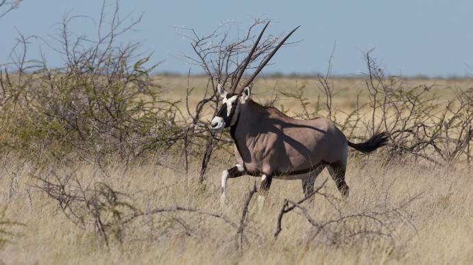 Namibia 2013 84