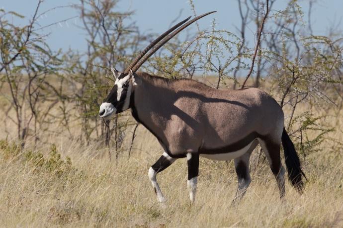 Namibia 2013 88