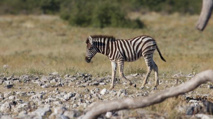Namibia 2013 9