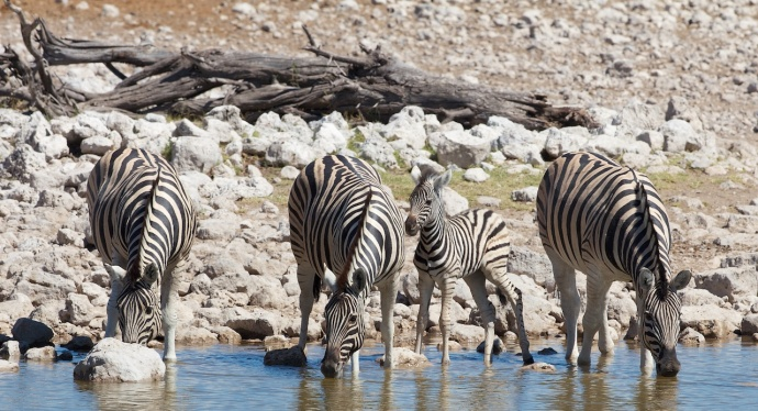 Namibia 2013 92