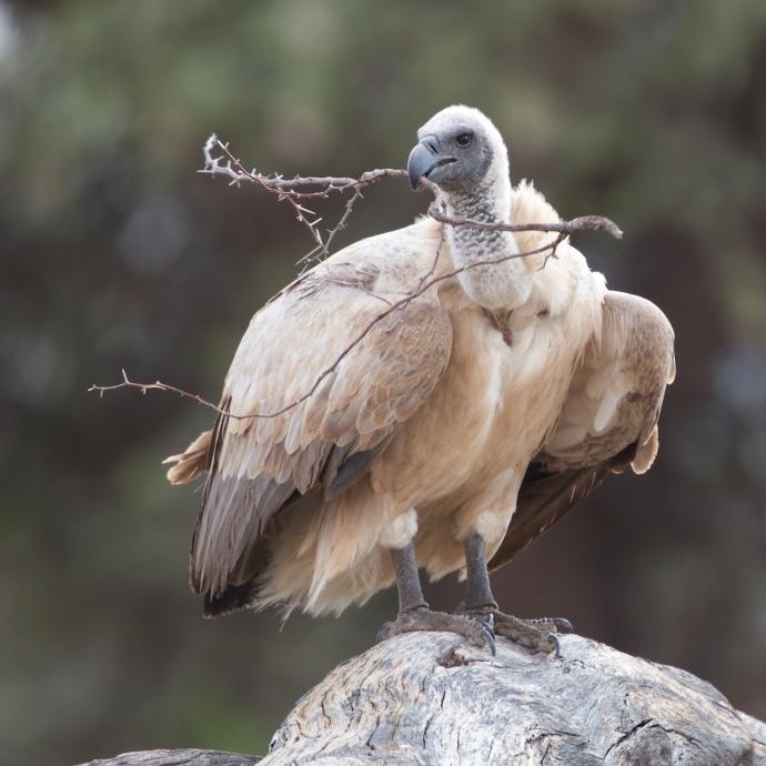 Namibia 2013 100