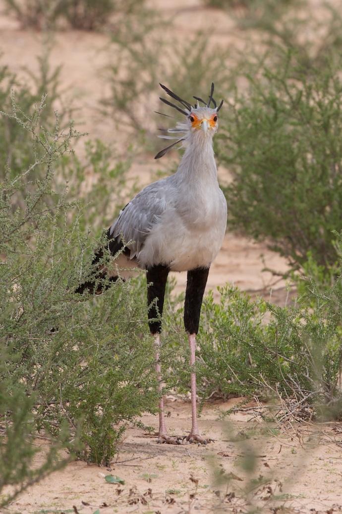 Namibia 2013 22