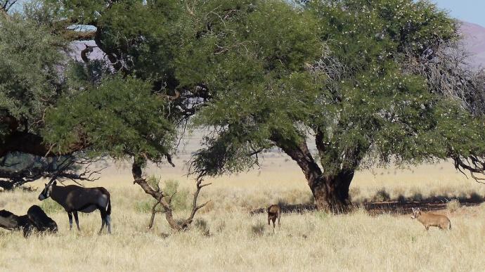 Namibia 2013 226