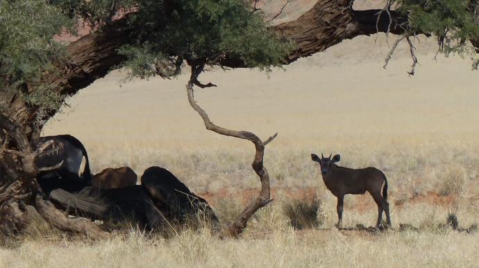 Namibia 2013 228