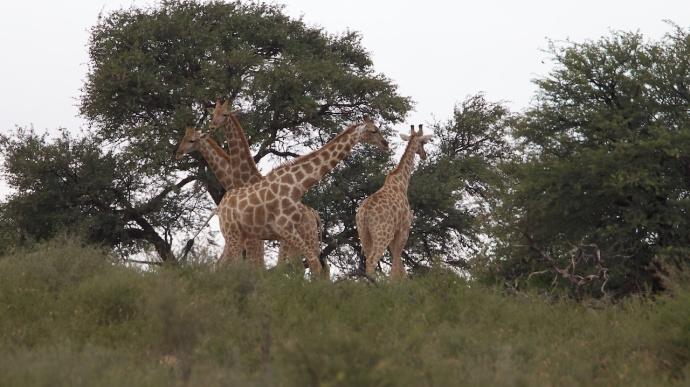 Namibia 2013 234