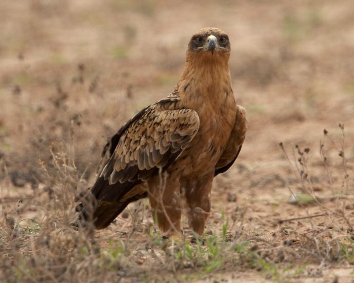 Namibia 2013 287