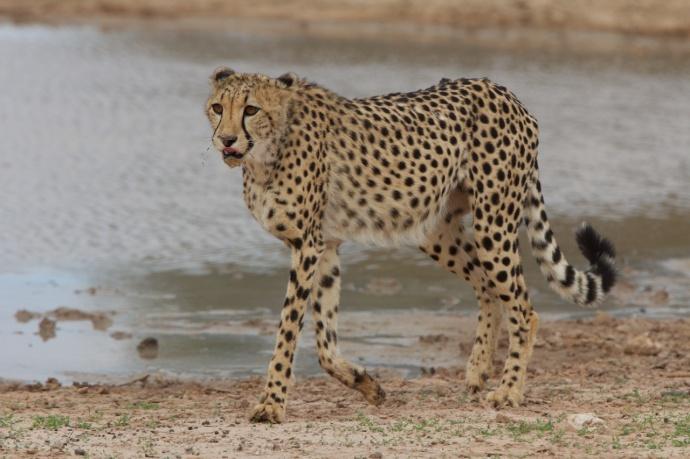 Namibia 2013 323