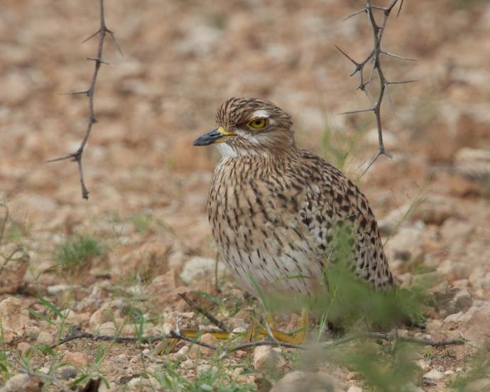 Namibia 2013 328