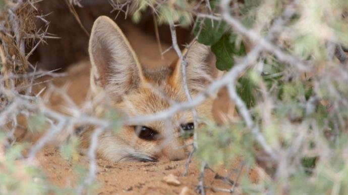 Namibia 2013 330