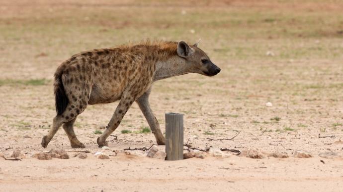 Namibia 2013 345