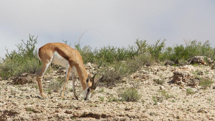 Namibia 2013 395