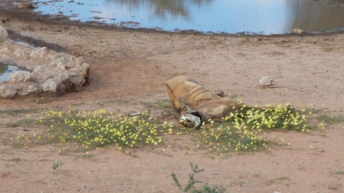 Namibia 2013 417