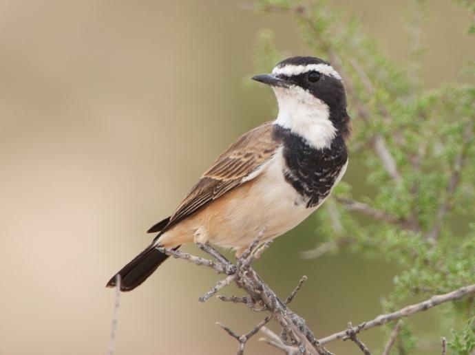 Namibia 2013 48 (1)