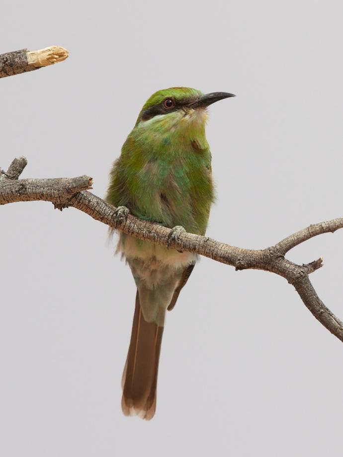 Namibia 2013 62