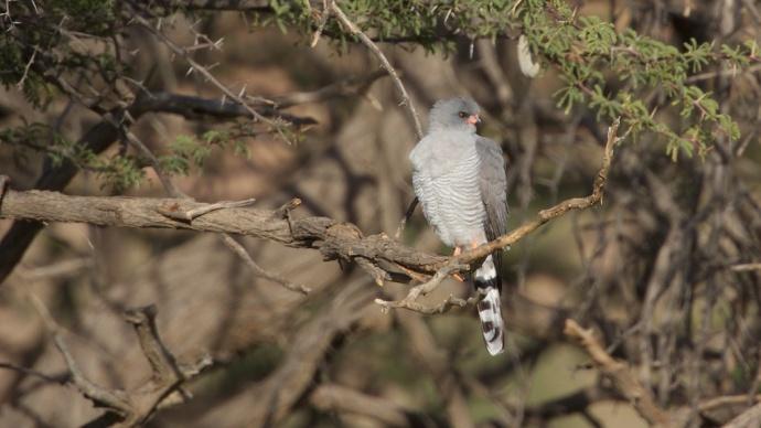 Namibia 2013 16