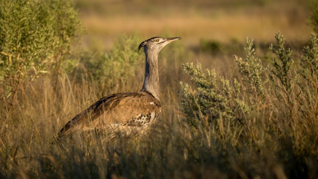 Botswana 4570
