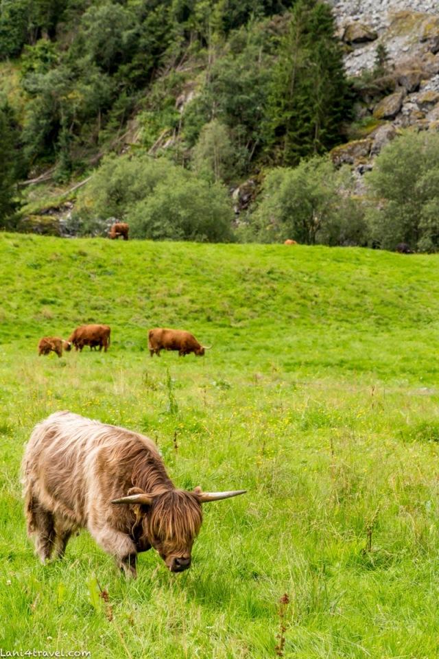 Norway 9422