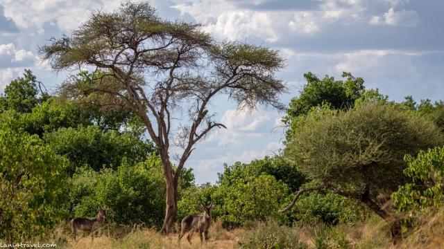 Mapungubwe 4756