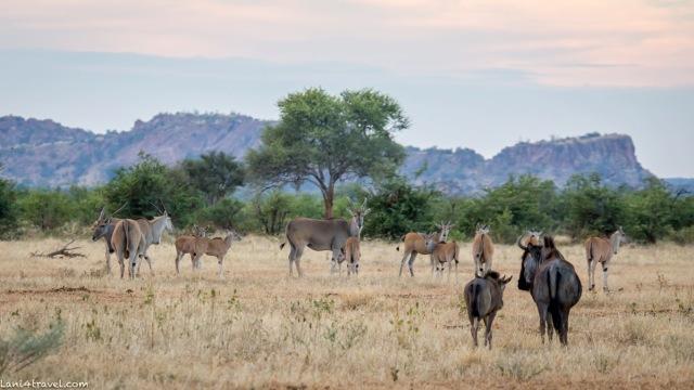 Mapungubwe 5075 2