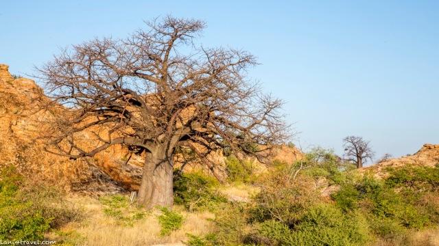 Mapungubwe 5869